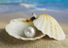 Domingo 17 Ciclo A - El tesoro escondido - La perla preciosa - la red para pescar